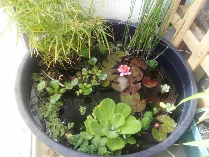 Lutter contre les algues vertes dans un bassin d 39 eau - Lutter contre les fourmis au jardin ...