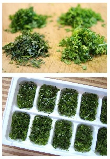 Cong lation des herbes aromatiques ou fines herbes guide - Congeler les haricots verts du jardin ...