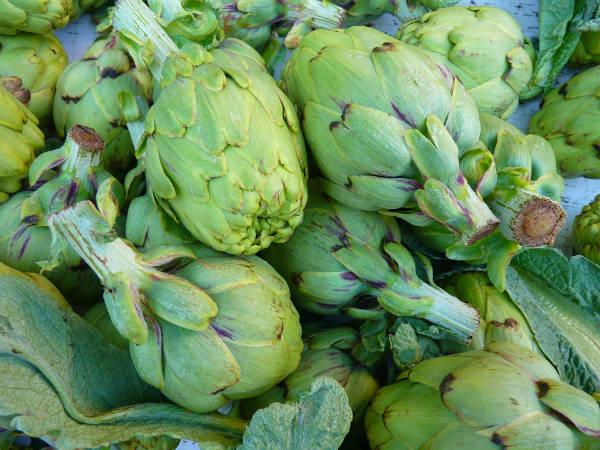 Quelles plantes planter en automne guide astuces - Quel legume planter en aout ...