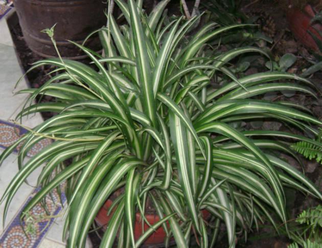 Les plantes qui aiment l 39 ombre guide astuces for Plante qui aime l ombre