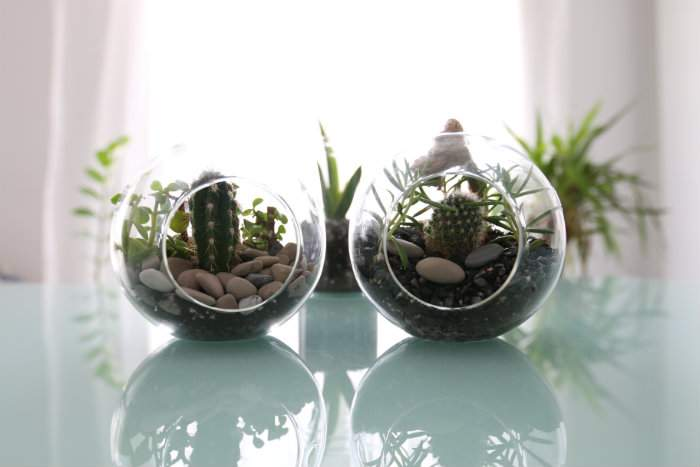 comment faire un terrarium guide astuces. Black Bedroom Furniture Sets. Home Design Ideas