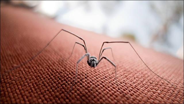 r pulsifs naturels contre les araign es guide astuces. Black Bedroom Furniture Sets. Home Design Ideas