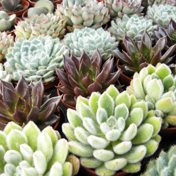 Les plantes d 39 int rieur qui aiment le soleil guide astuces - Plante qui aime le soleil ...