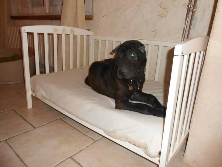 Transformation d 39 un lit b b en couchette pour chien - Astuce pour rehausser un lit ...