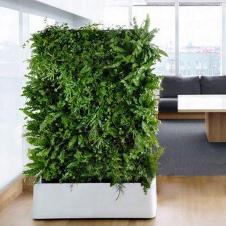 astuces pour cr er votre jardin vertical int rieur guide astuces. Black Bedroom Furniture Sets. Home Design Ideas