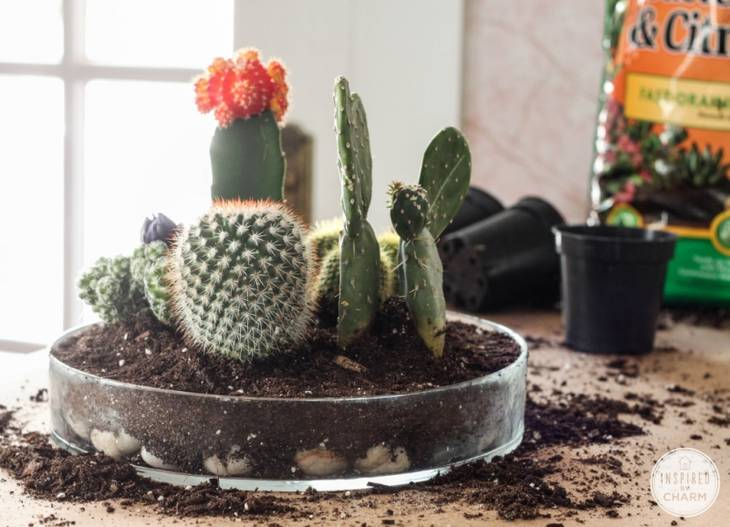 Terrarium Original Pour Vos Mini Cactus Guide Astuces