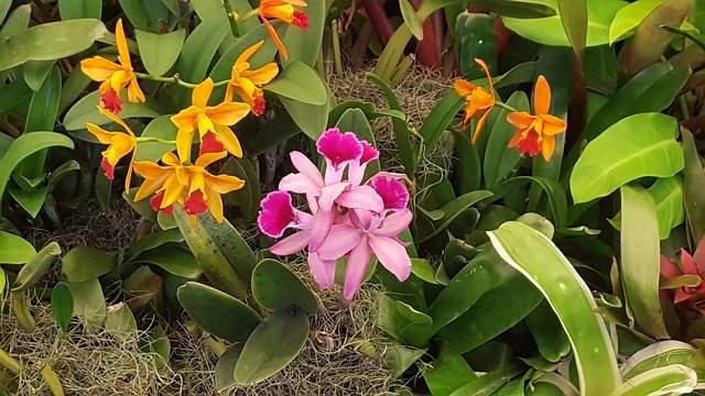 Comment planter et entretenir des orchid es l 39 ext rieur for Orchidee exterieur