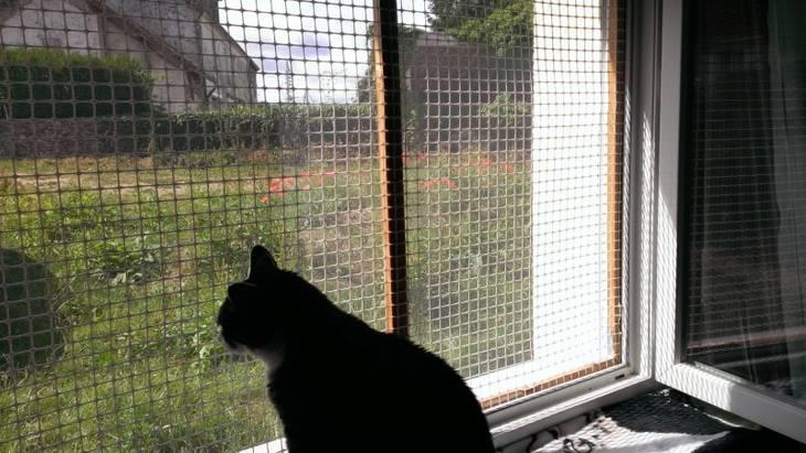 Protection pour ne pas que vos chats se sauvent par les - Grillage fenetre chat ...