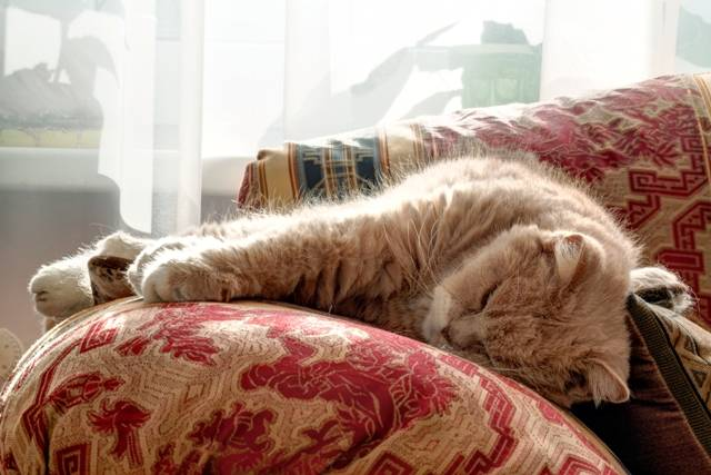 Puces dans la maison fabulous un collier antipuces pour - Comment lutter contre les puces de lit ...