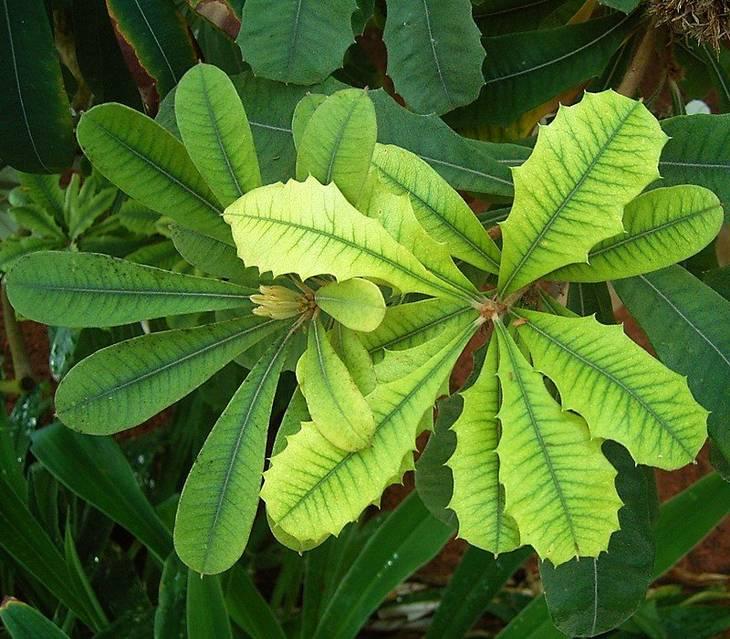 Raviver les feuilles jaunies des plantes guide astuces for Plante 8 feuilles