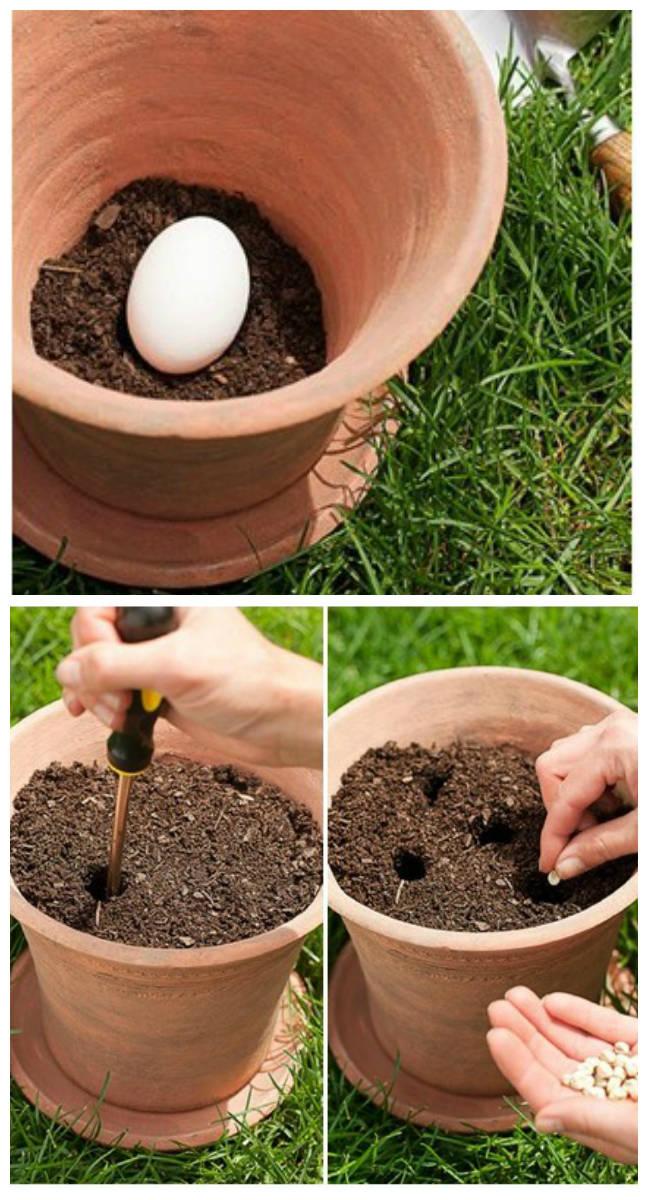 pourquoi faut il planter un uf cru dans vos pots de fleurs guide astuces. Black Bedroom Furniture Sets. Home Design Ideas
