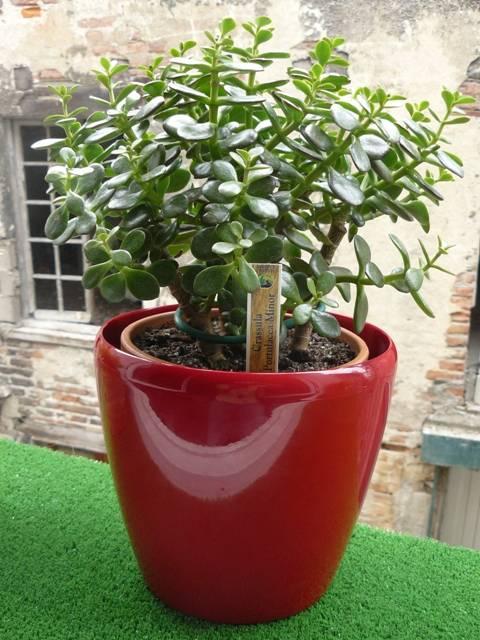 Quelles plantes choisir quand on n 39 a pas la main verte guide astuces for Choisir plantes jardin