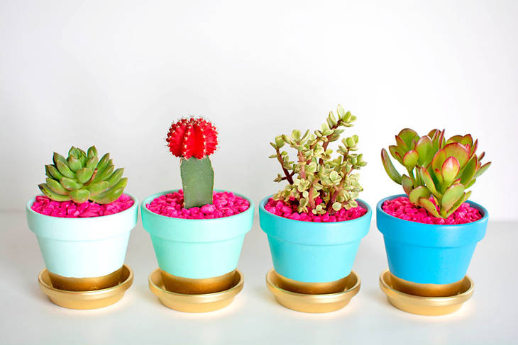 pots de fleurs personnalis s pour vos mini cactus guide astuces. Black Bedroom Furniture Sets. Home Design Ideas