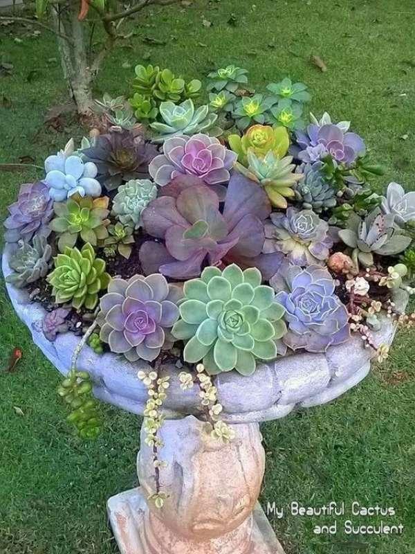 22 id es d co insolites avec des plantes succulentes - Plantes grasses en pot ...