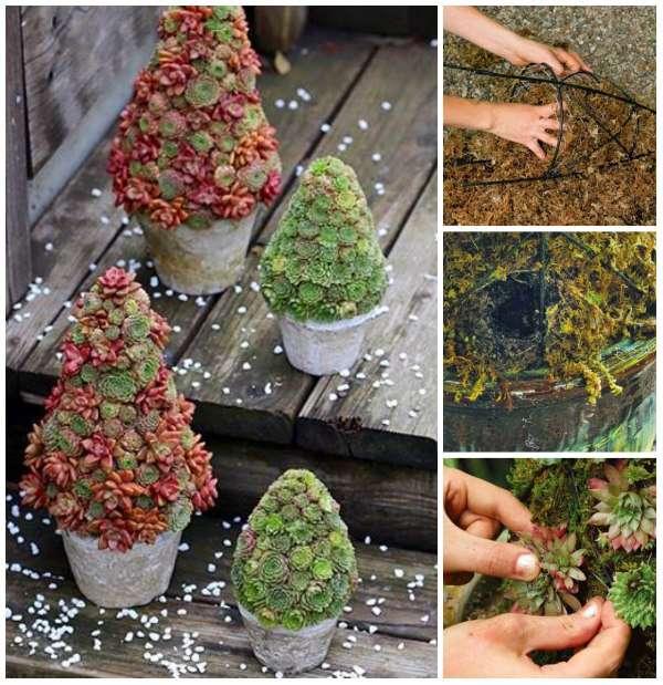 22 id es d co insolites avec des plantes succulentes guide astuces - Plantes succulentes guide pratique ...