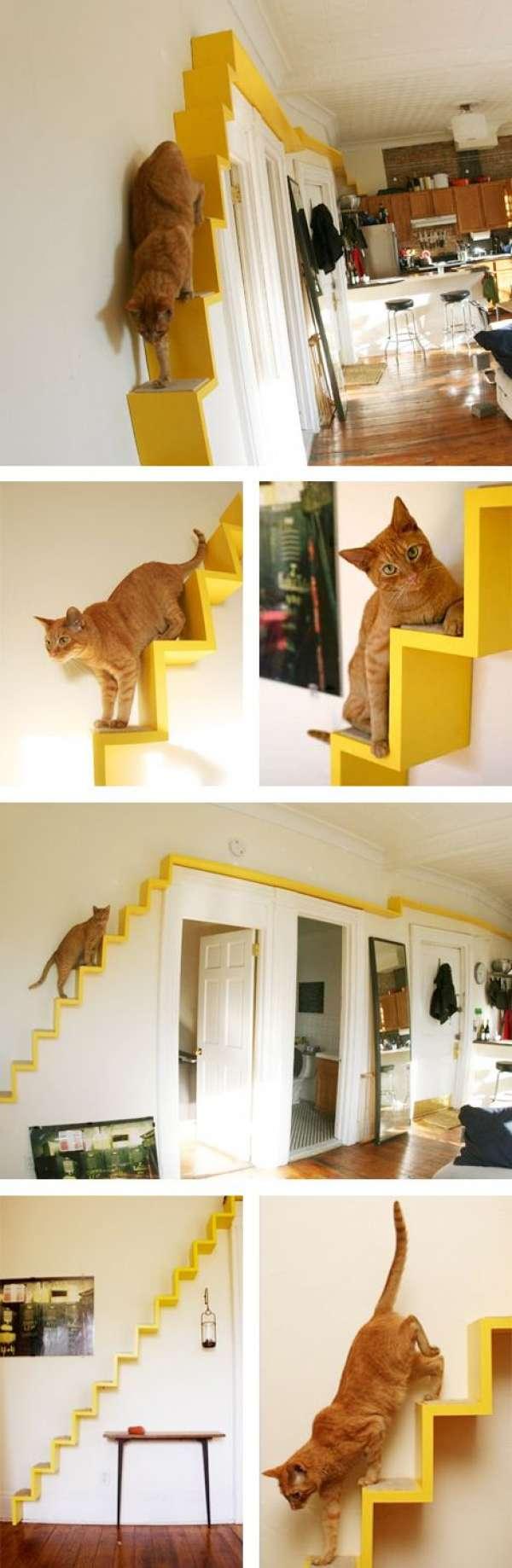Terrain de jeux mural pour chats